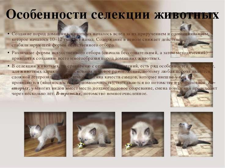 Особенности селекции животных Создание пород домашних животных началось вслед...