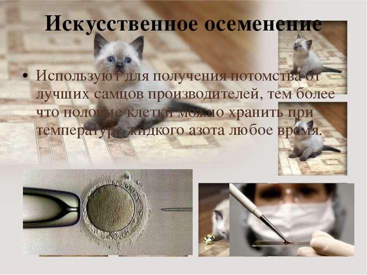 Искусственное осеменение Используют для получения потомства от лучших самцов ...