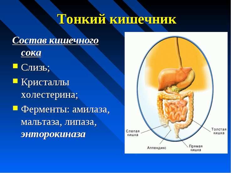 Тонкий кишечник Состав кишечного сока Слизь; Кристаллы холестерина; Ферменты:...