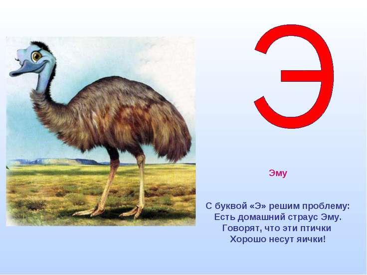 Эму С буквой «Э» решим проблему: Есть домашний страус Эму. Говорят, что эти п...