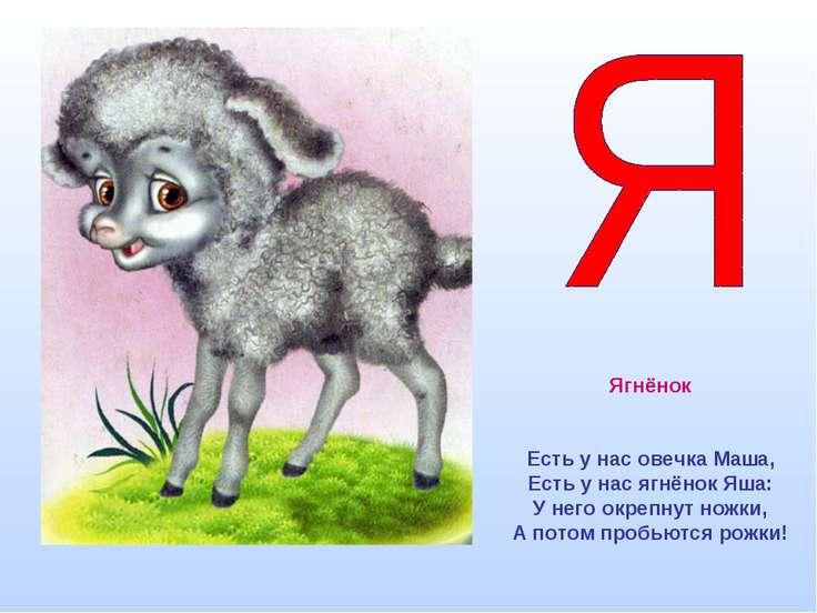 Ягнёнок Есть у нас овечка Маша, Есть у нас ягнёнок Яша: У него окрепнут ножки...