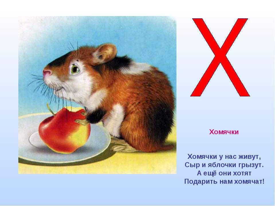 Хомячки Хомячки у нас живут, Сыр и яблочки грызут. А ещё они хотят Подарить н...
