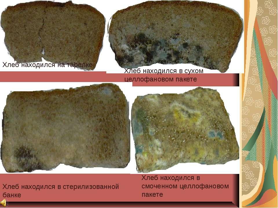 Фотографии после наблюдений Хлеб находился на тарелке Хлеб находился в сухом ...