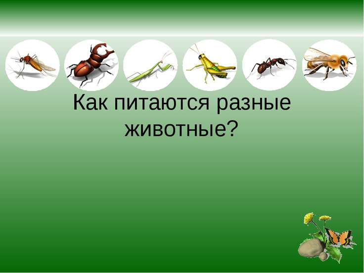 Как питаются разные животные?