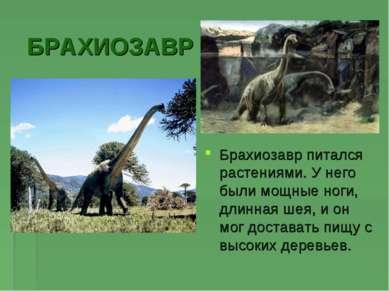 БРАХИОЗАВР Брахиозавр питался растениями. У него были мощные ноги, длинная ше...
