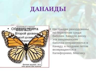 ДАНАИДЫ Настоящие рекордсмены по перелётам среди бабочек. Каждую весну эти ам...