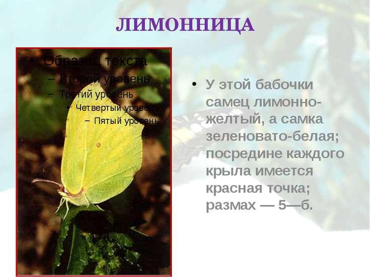 ЛИМОННИЦА У этой бабочки самец лимонно-желтый, а самка зеленовато-белая; поср...