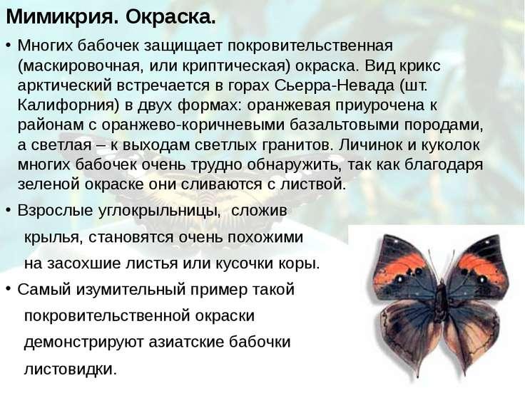 Мимикрия. Окраска. Многих бабочек защищает покровительственная (маскировочная...