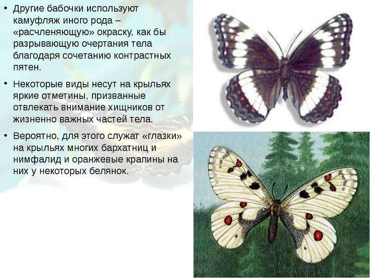 Другие бабочки используют камуфляж иного рода – «расчленяющую» окраску, как б...