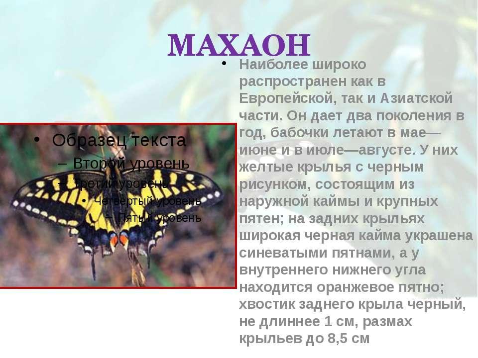 МАХАОН Наиболее широко распространен как в Европейской, так и Азиатской части...