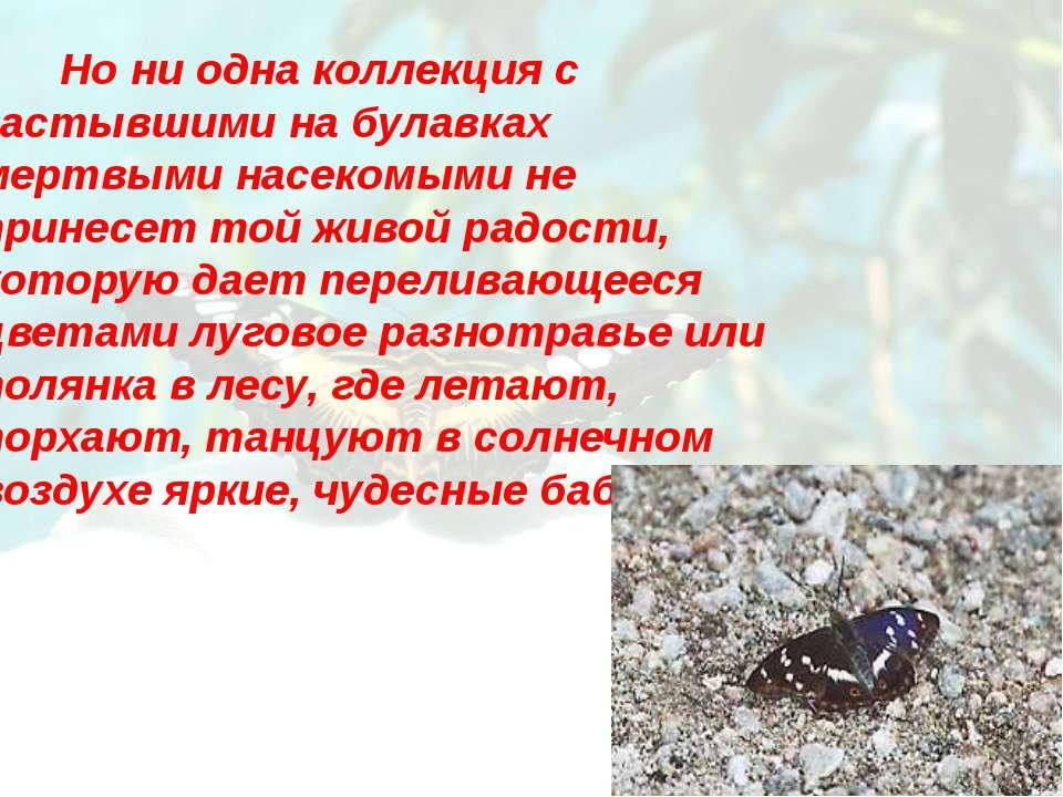 Но ни одна коллекция с застывшими на булавках мертвыми насекомыми не принесет...