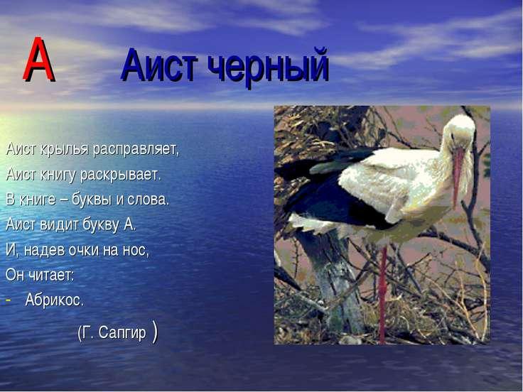 А Аист черный Аист крылья расправляет, Аист книгу раскрывает. В книге – буквы...