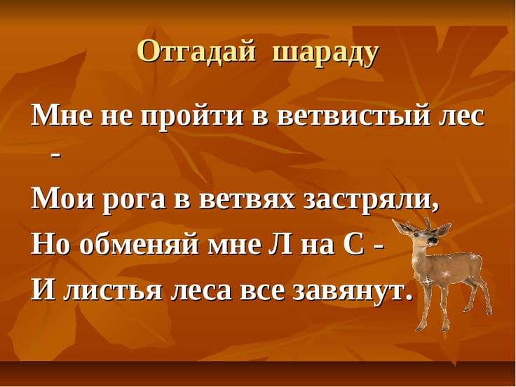 Отгадай шараду Мне не пройти в ветвистый лес - Мои рога в ветвях застряли, Но...