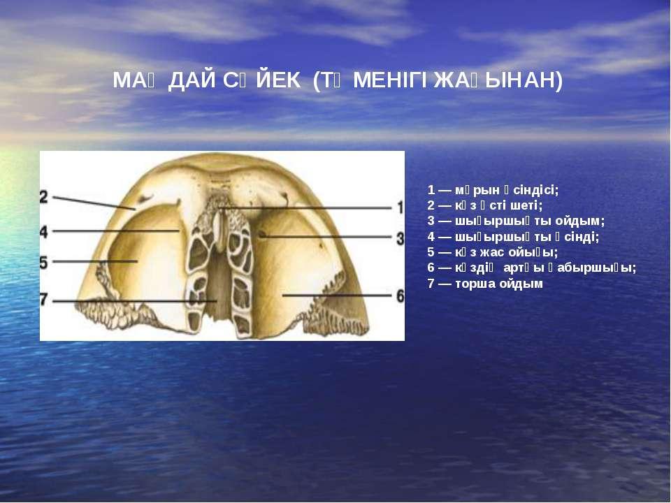 1 — мұрын өсіндісі; 2 — көз үсті шеті; 3 — шығыршықты ойдым; 4 — шығыршықты ө...