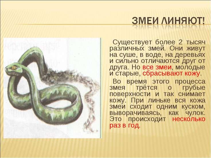Существует более 2 тысяч различных змей. Они живут на суше, в воде, на деревь...