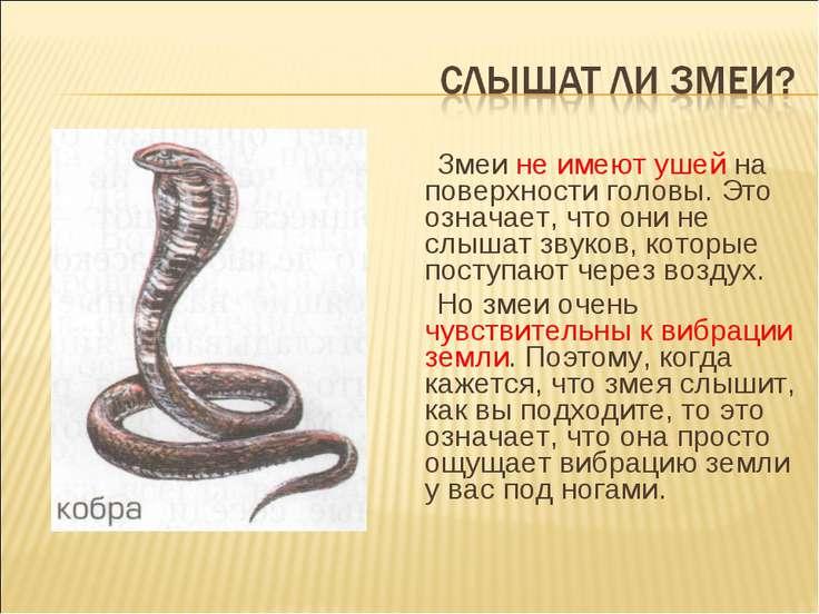 Змеи не имеют ушей на поверхности головы. Это означает, что они не слышат зву...