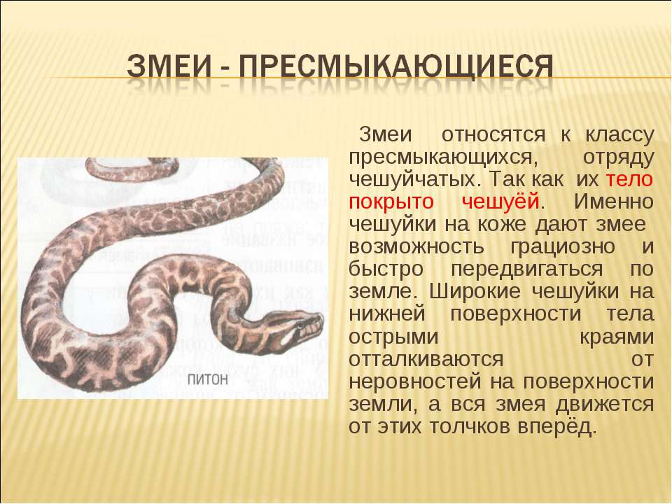 Змеи относятся к классу пресмыкающихся, отряду чешуйчатых. Так как их тело по...