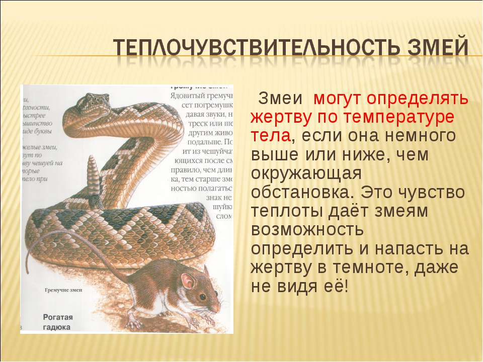 Змеи могут определять жертву по температуре тела, если она немного выше или н...