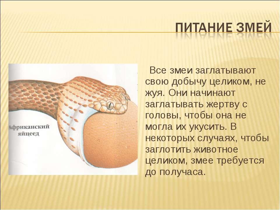 Все змеи заглатывают свою добычу целиком, не жуя. Они начинают заглатывать же...
