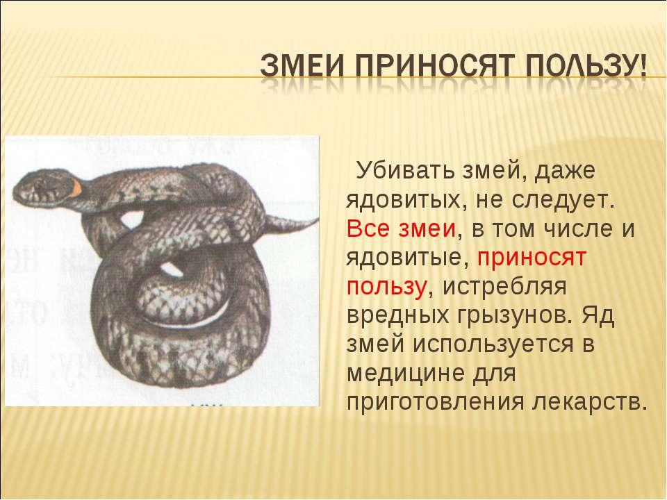 Убивать змей, даже ядовитых, не следует. Все змеи, в том числе и ядовитые, пр...