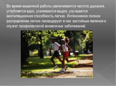 Во время мышечной работы увеличивается частота дыхания, углубляется вдох, уси...