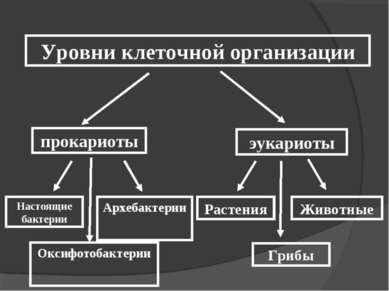Уровни клеточной организации Настоящие бактерии Архебактерии Растения Грибы Ж...