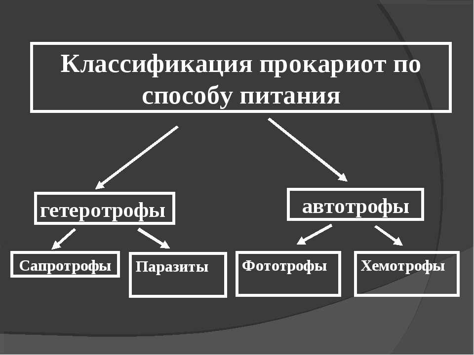 Классификация прокариот по способу питания