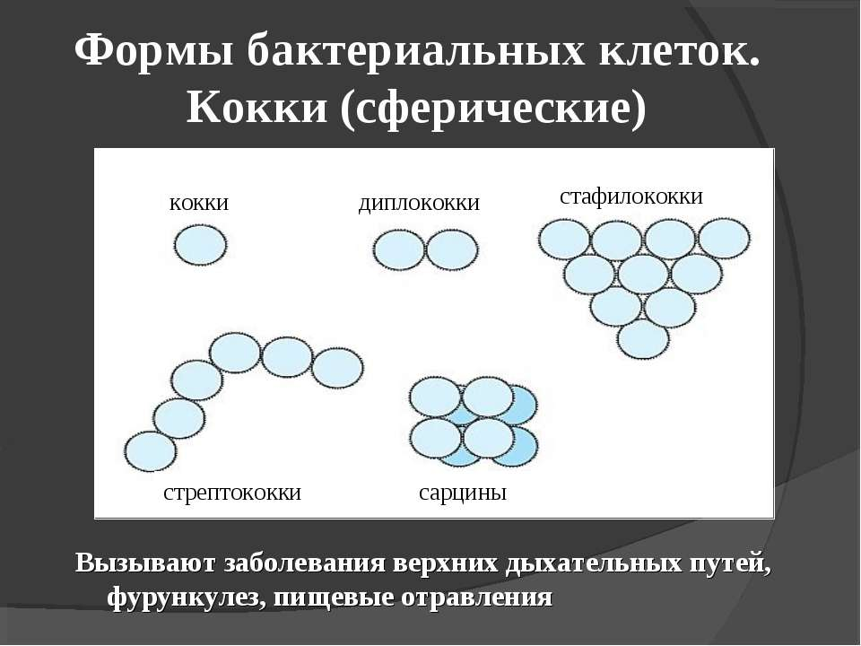 Формы бактериальных клеток. Кокки (сферические) Вызывают заболевания верхних ...