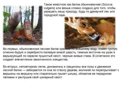Такое животное как белка обыкновенная (Sciurus vulgaris) или векша словно соз...
