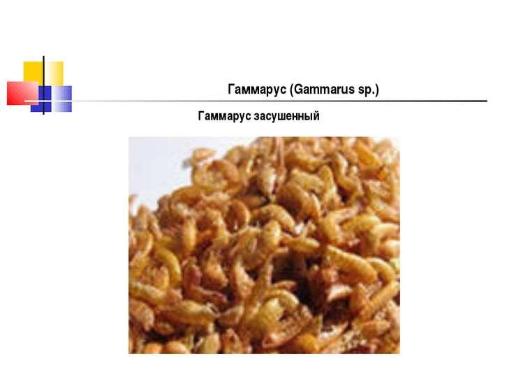 Гаммарус (Gammarus sp.) Гаммарус засушенный