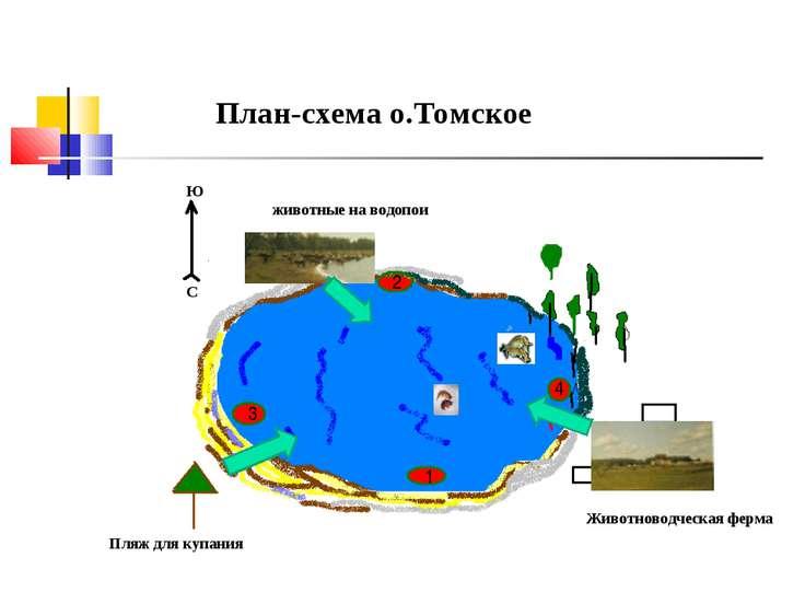 План-схема о.Томское С Ю Пляж для купания животные на водопои Животноводческа...