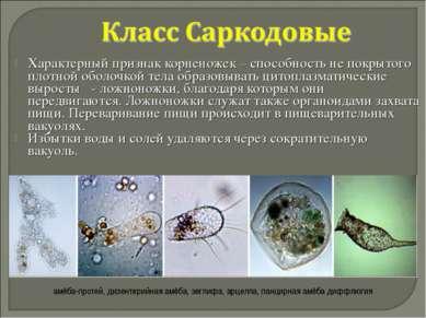 Характерный признак корненожек – способность не покрытого плотной оболочкой т...