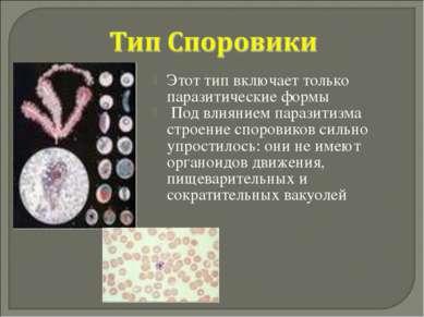 Этот тип включает только паразитические формы Под влиянием паразитизма строен...