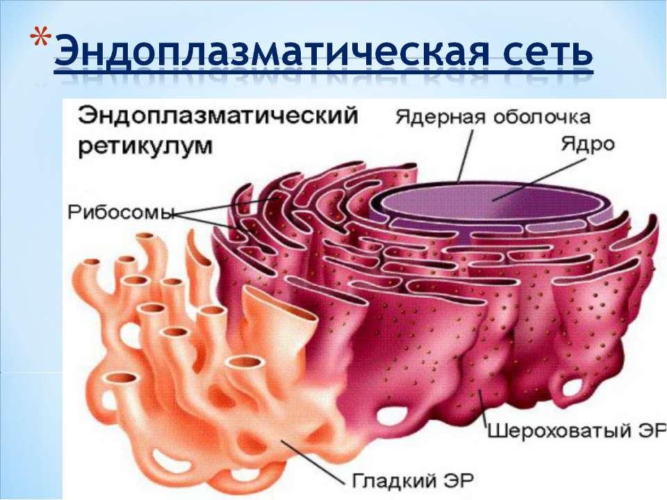 minet-v-mashine-podolsk-klimovsk