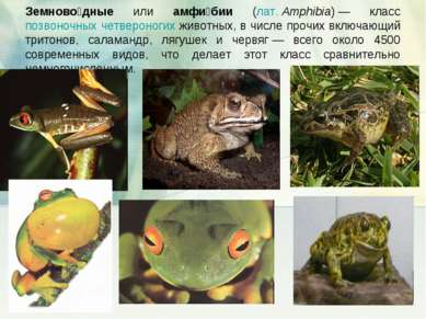 Земново дные или амфи бии (лат.Amphibia)— класс позвоночных четвероногих жи...