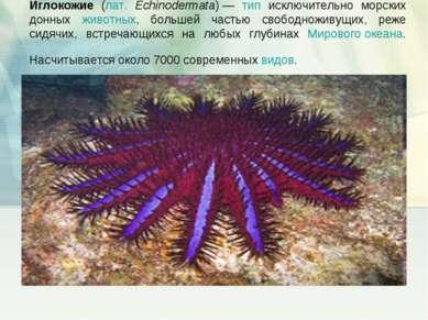 Иглокожие (лат. Echinodermata)— тип исключительно морских донных животных, б...