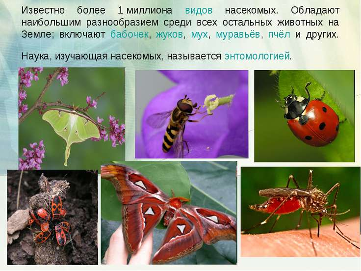 Известно более 1миллиона видов насекомых. Обладают наибольшим разнообразием ...