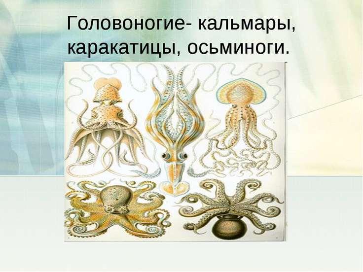 Головоногие- кальмары, каракатицы, осьминоги.