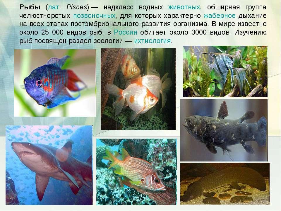 Рыбы (лат. Pisces)— надкласс водных животных, обширная группа челюстноротых ...