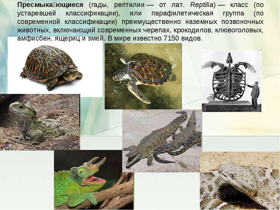 Пресмыка ющиеся (гады, рептилии— от лат. Reptilia)— класс (по устаревшей кл...