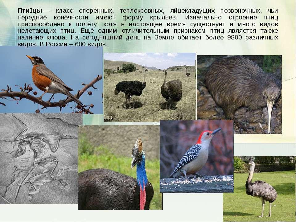 Пти цы— класс оперённых, теплокровных, яйцекладущих позвоночных, чьи передни...