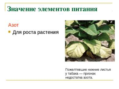 Значение элементов питания Азот Для роста растения Пожелтевшие нижние листья ...