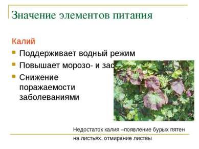 Значение элементов питания Калий Поддерживает водный режим Повышает морозо- и...