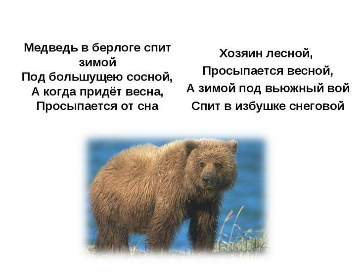 Медведь в берлоге спит зимой Под большущею сосной, А когда придёт весна, Прос...