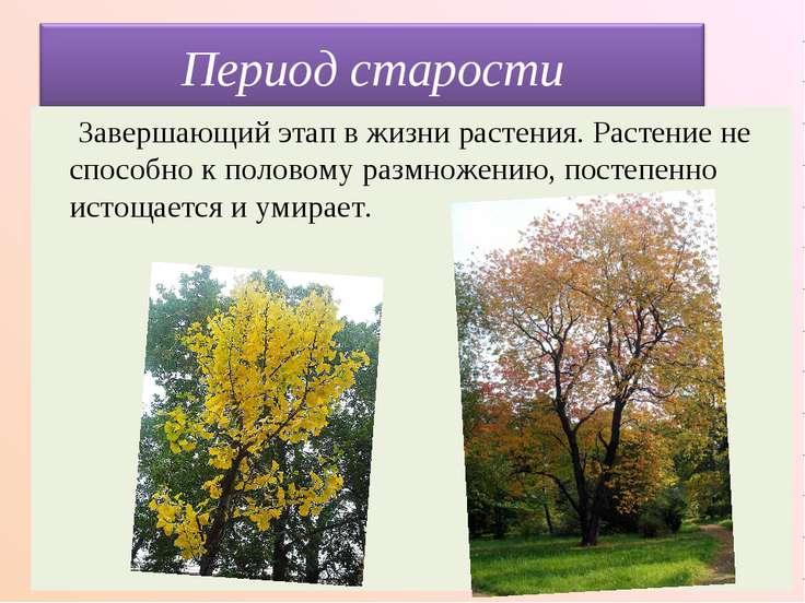 Завершающий этап в жизни растения. Растение не способно к половому размножени...