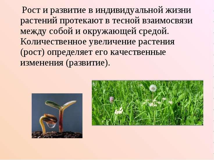 Рост и развитие в индивидуальной жизни растений протекают в тесной взаимосвяз...