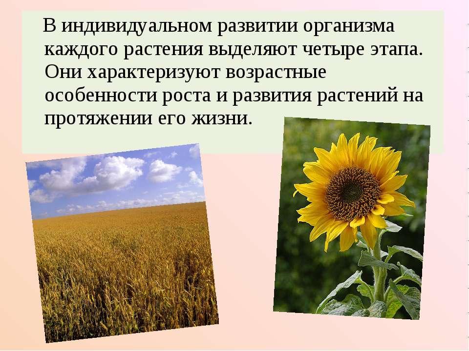 В индивидуальном развитии организма каждого растения выделяют четыре этапа. О...