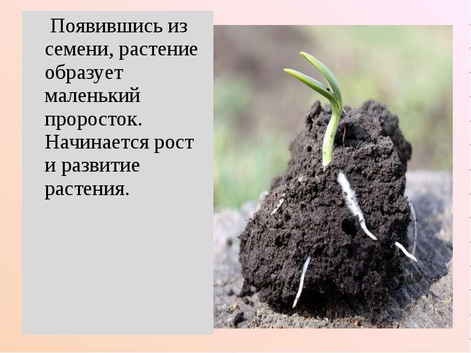 Появившись из семени, растение образует маленький проросток. Начинается рост ...