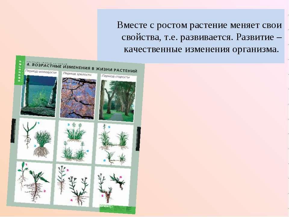Вместе с ростом растение меняет свои свойства, т.е. развивается. Развитие – к...