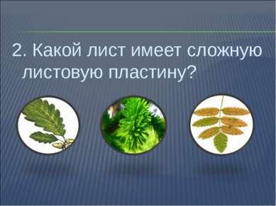 2. Какой лист имеет сложную листовую пластину?
